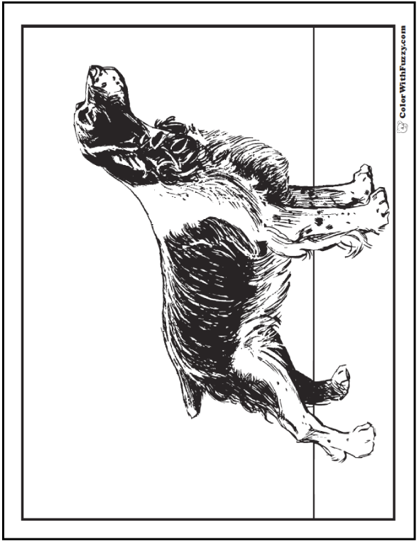 Dog coloring page - Spaniel