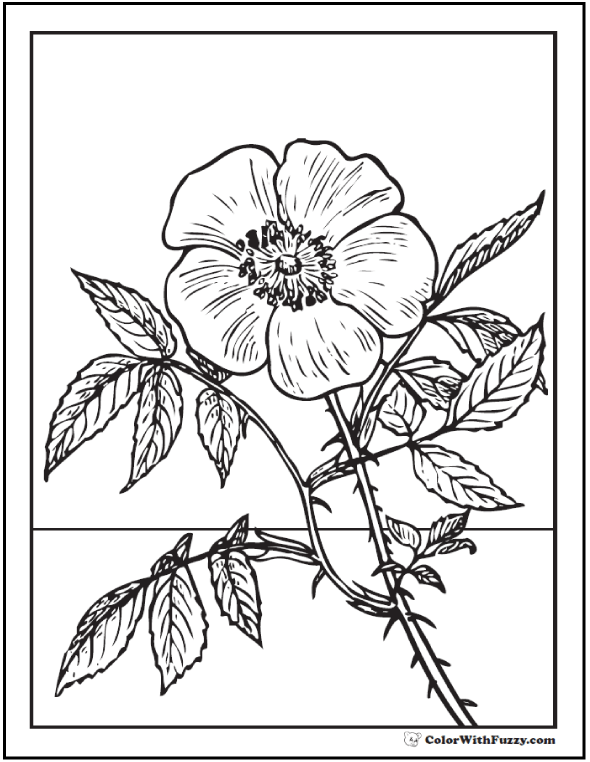 Realistic Wild Rose Coloring