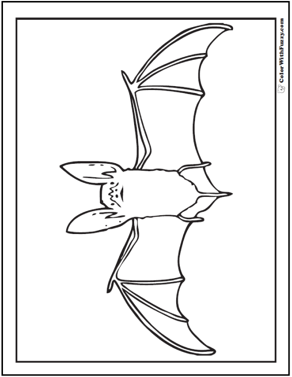 Halloween coloring pages: Realistic Bat Coloring Page
