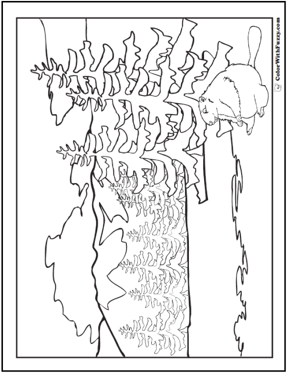 Beaver Coloring Pages Dams And Habitat