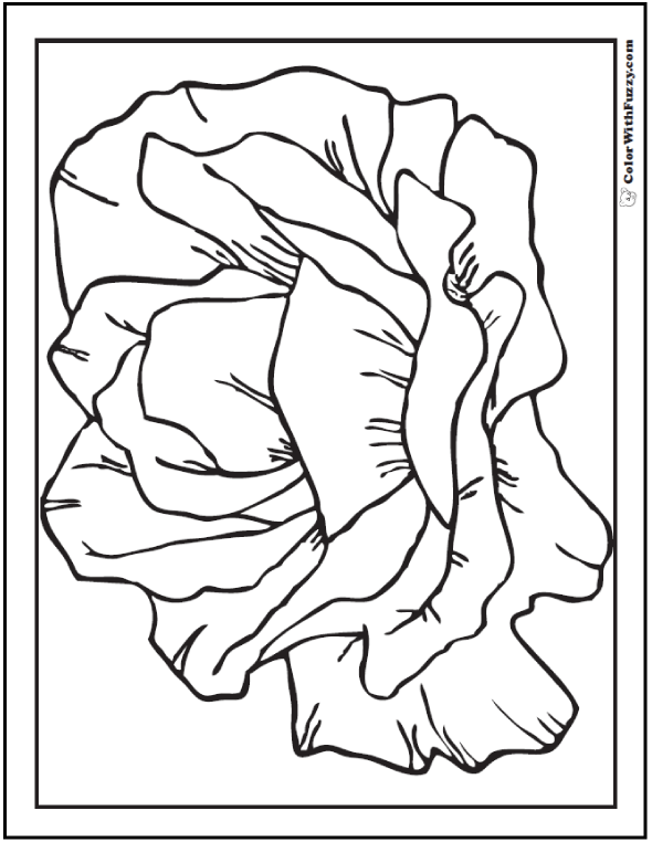 blooming rose outline