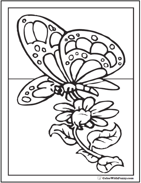 Butterfly Daisy Coloring Sheet