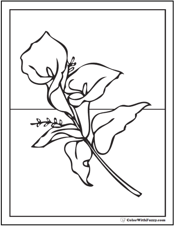 calla lily coloring picture
