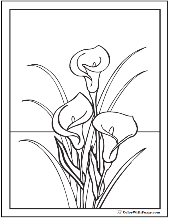 Calla Lilies To Color