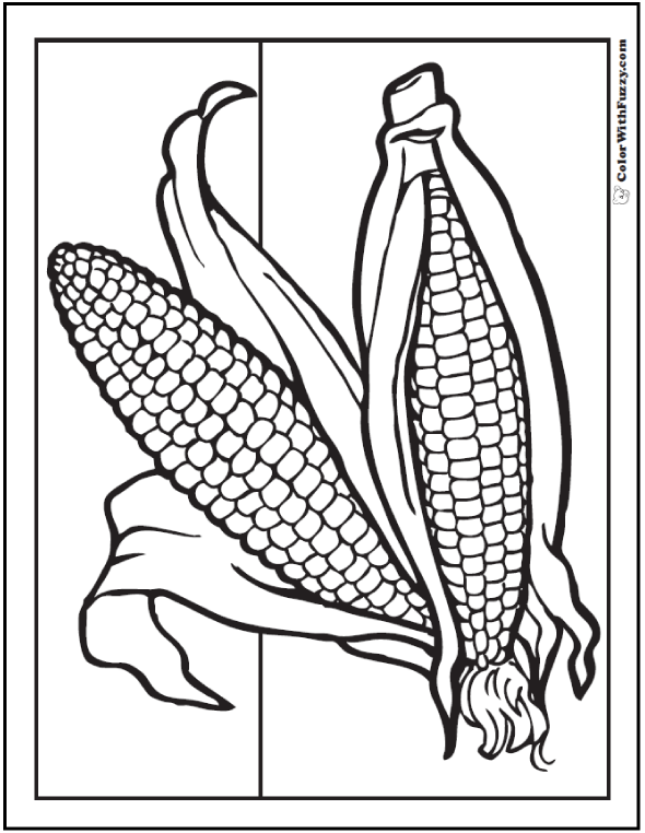 Summer Or Fall Corn Coloring Page: Two corn on the cob with husks.