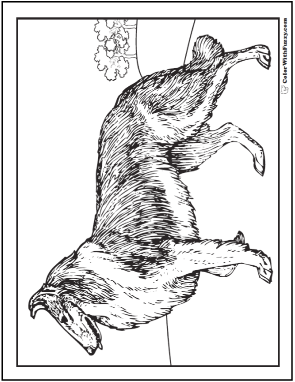 Dog Coloring Pages: Collie