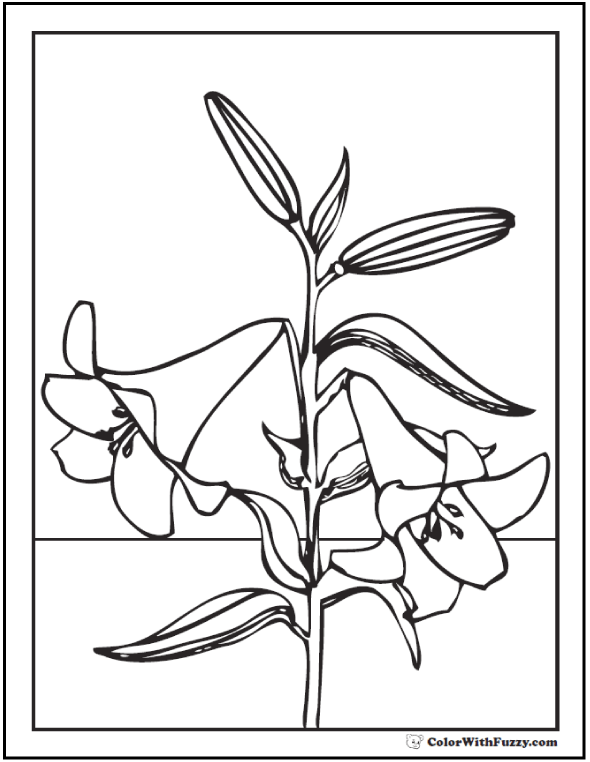 Lily Coloring Pages Customize