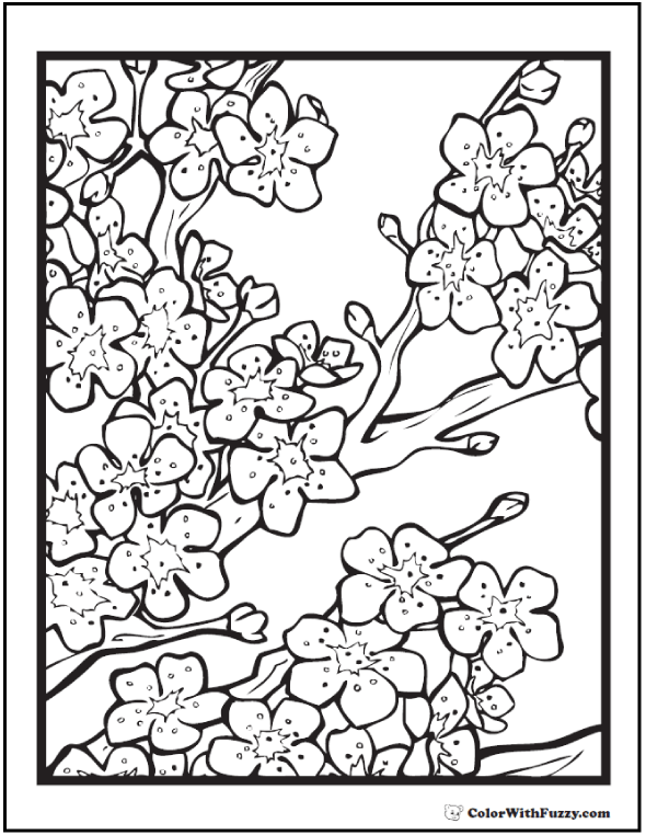 Cherry Blossoms Flower Adult Coloring Pages