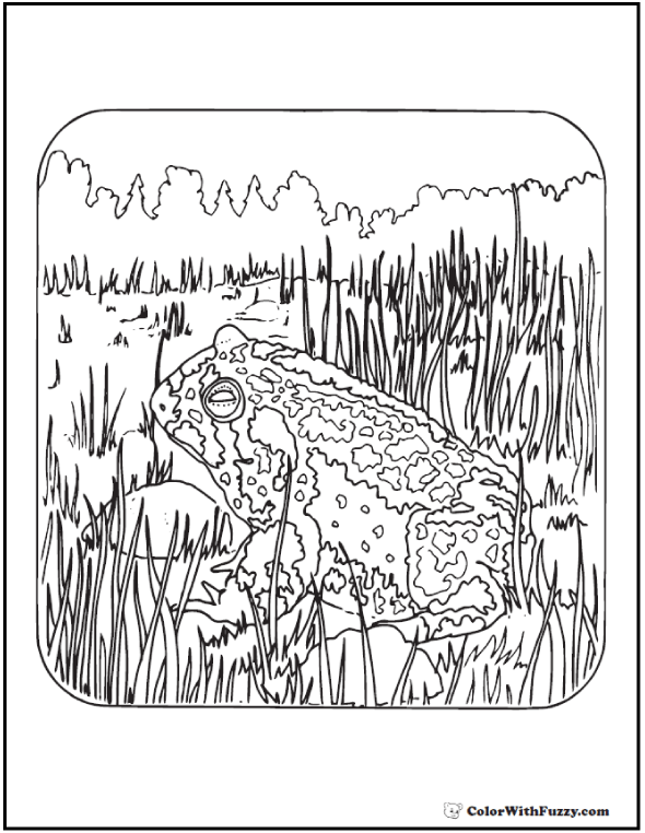 Wilderness Toad - Free Adult Coloring Pages