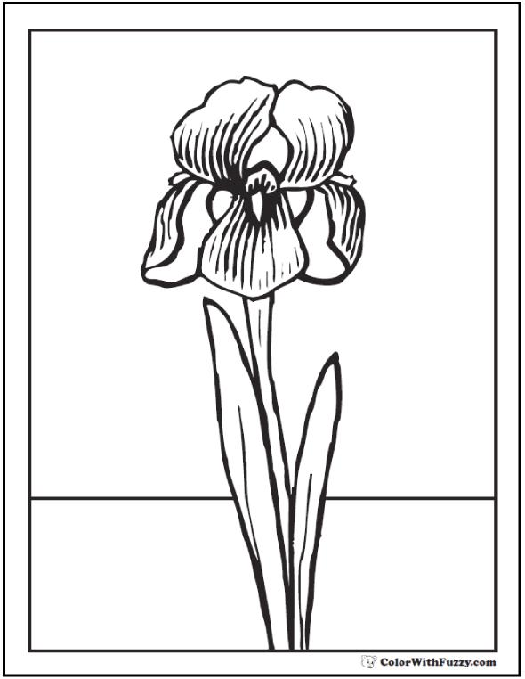 Iris Spring Flowers Coloring Printable