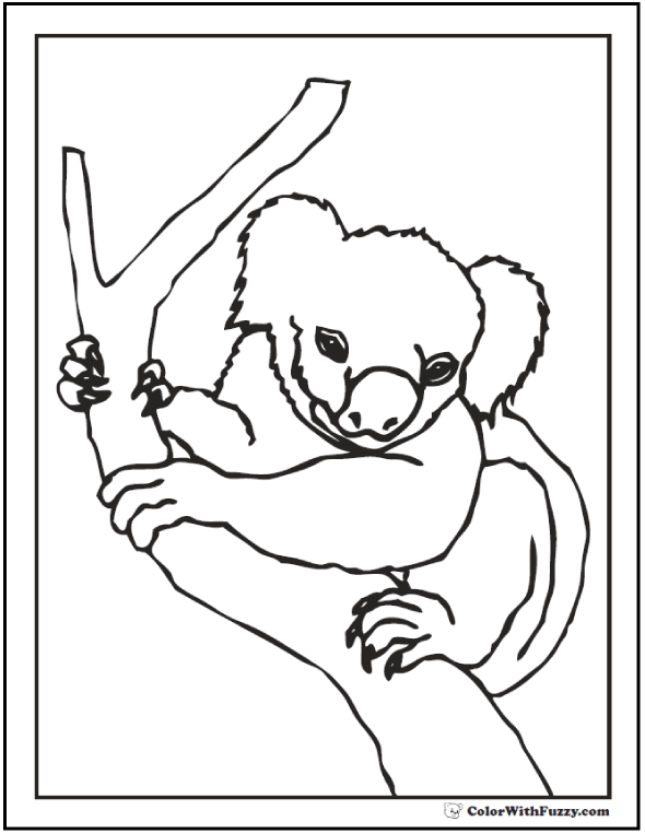 Picture Of A Koala In A Tree For Kids To Color