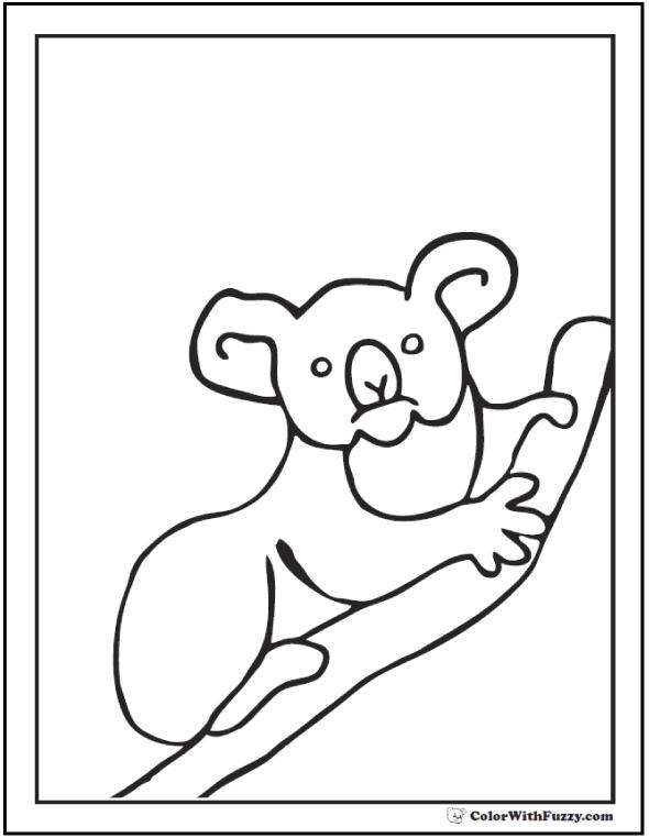 Darling Koala Bear Picture
