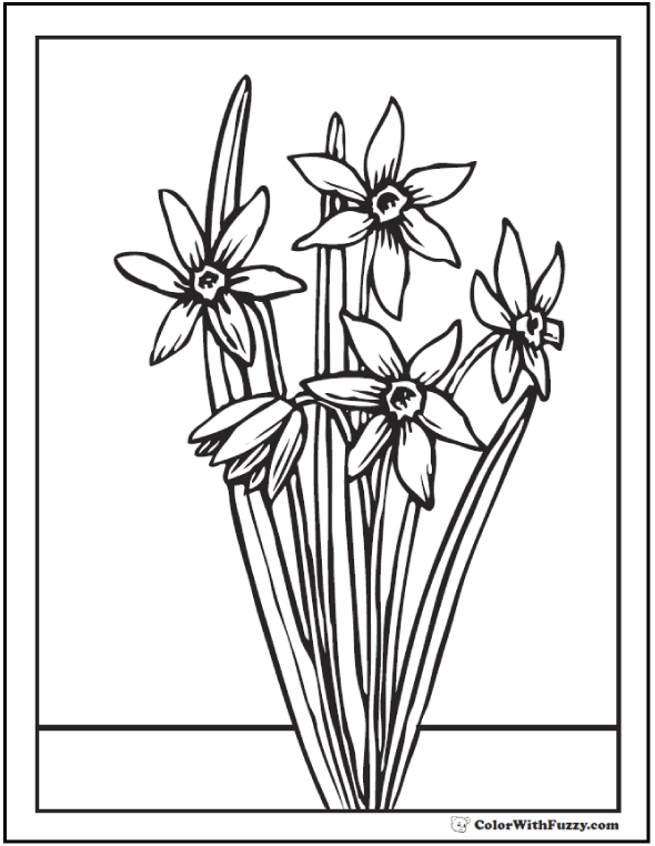 Daffodil or Narcissus Spring Flowers Coloring Sheet