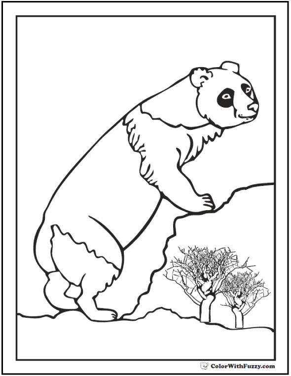 Panda Bear Coloring Sheet: Climbing the rocks.