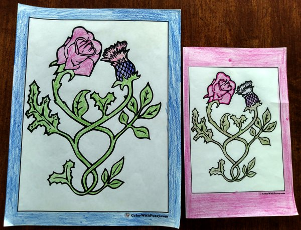 Coloring Pages of Roses -  Rose and thistle theme.