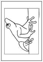 Poison dart frog coloring page.