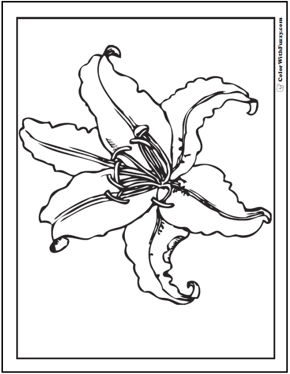 Printable Lily Coloring Page