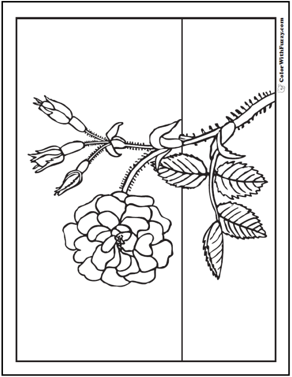 Wild Rose Stem Rose Buds Coloring Sheet