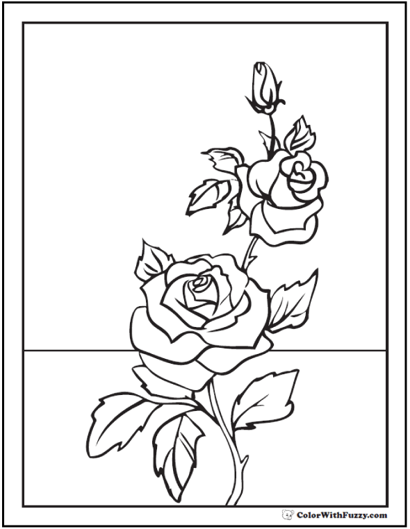 Rose Coloring Page Buds On Stem