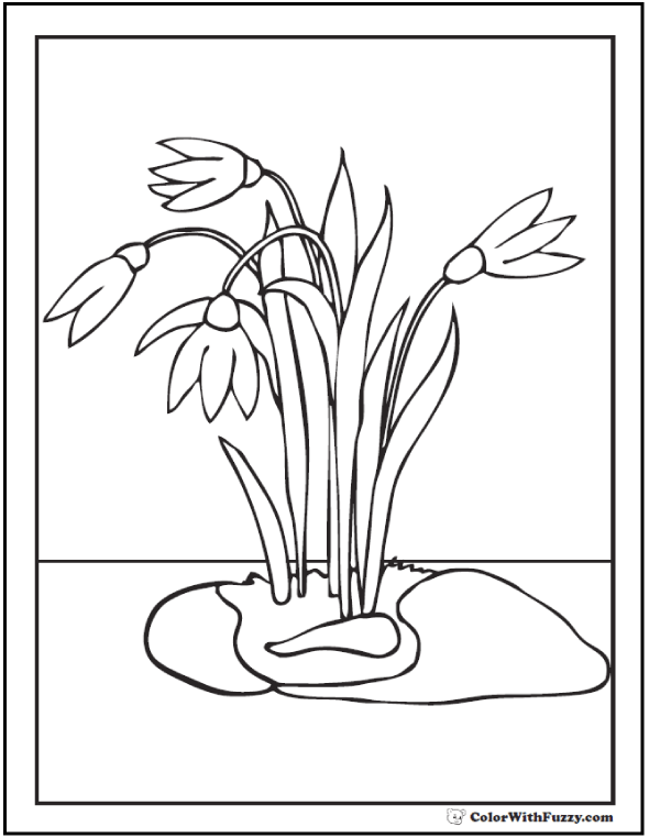 Crocus or Snowdrop Spring Flowers Coloring Pages