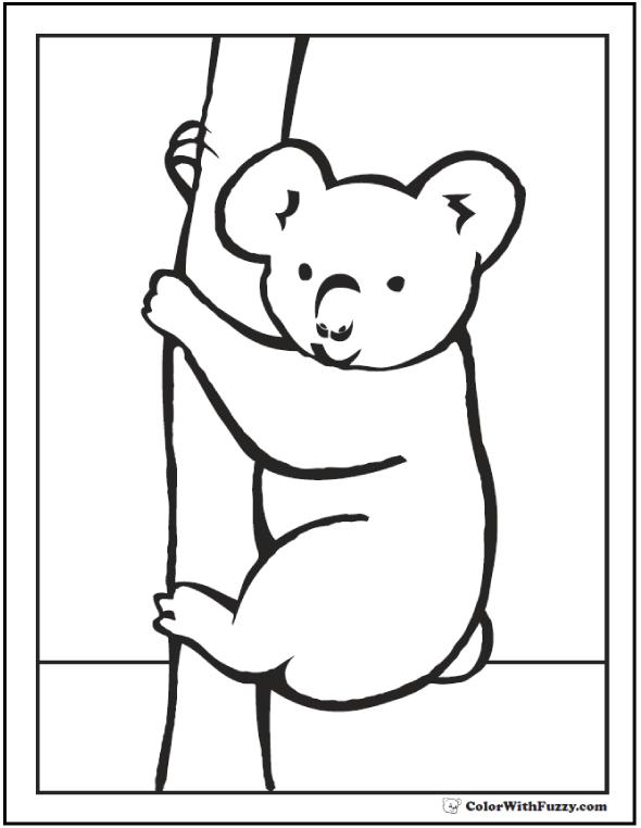 Peek A Boo Koala Coloring Sheet