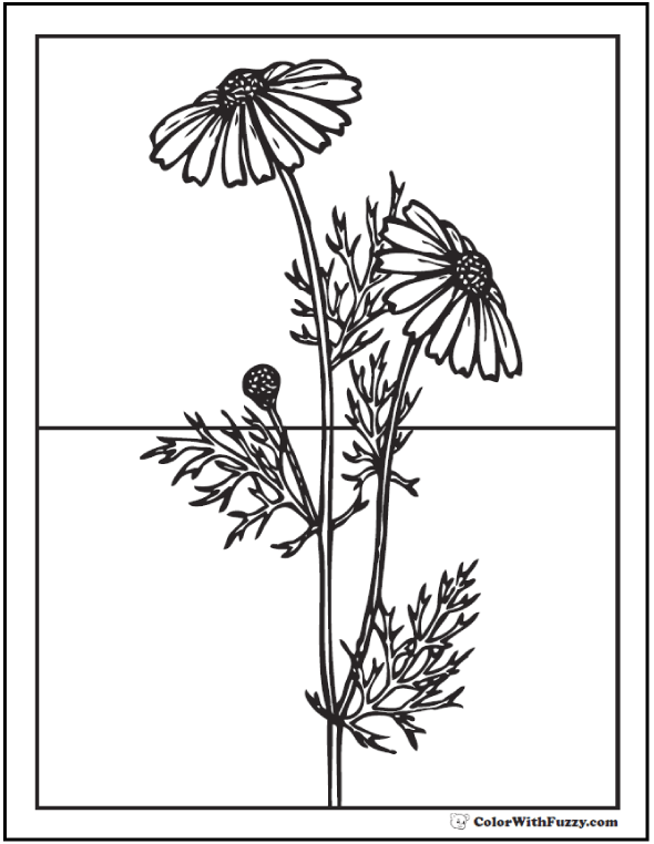 medium daisy flower coloring pages - photo#30