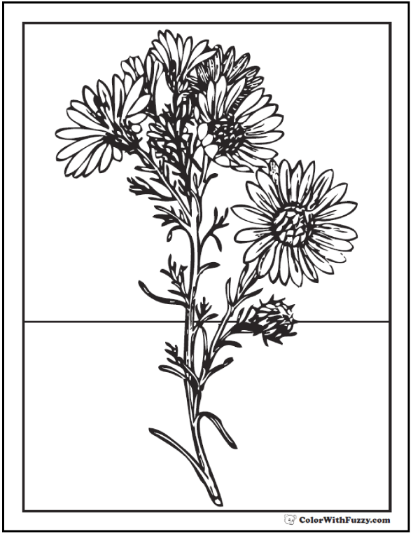 Wild Daisy Coloring Pages