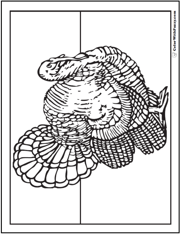 30 Turkey Coloring Pages Interactive