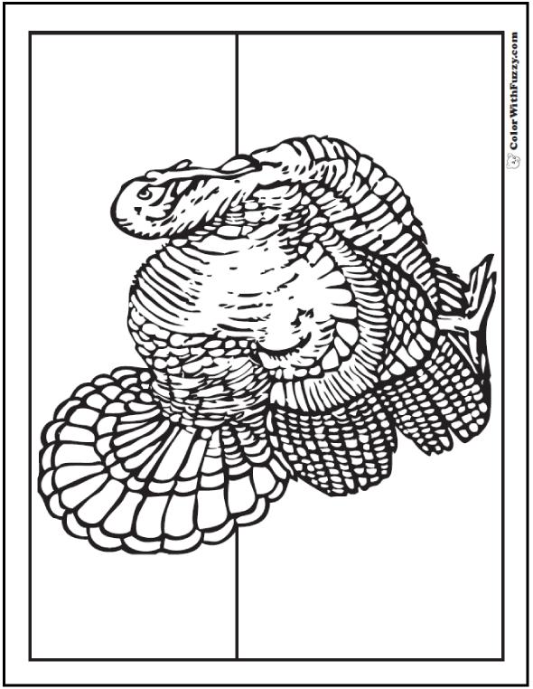 Wild Turkey Coloring Page