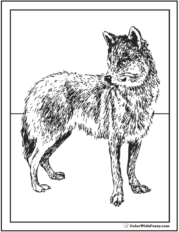 Fox or wolf coloring picture.
